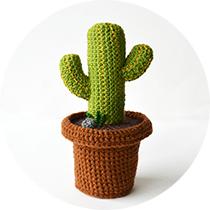 desert cactus!
